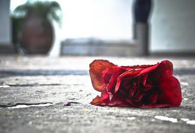 rosa_caída
